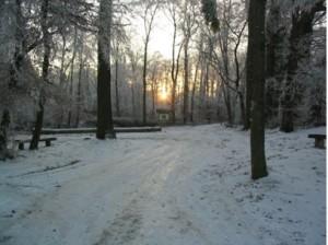 Uhlwiller_foret_hiver